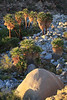 Guadalupe Canyon Baja California Mexico Palm Tree Oasis