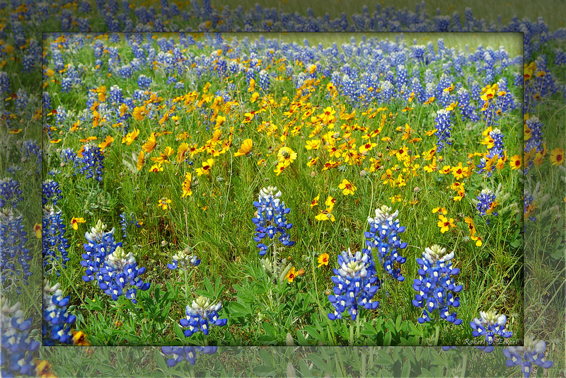 Round Rock Wildflowers (8x12/16x24)