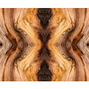 Bristlecone Abstract 7854