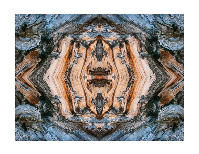 Bristlecone Abstract 8874