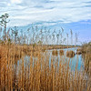Wetlands by the Road: NC 94, vicinity of Columbia, NC