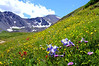 A colorful hillside of wildflowers along the eastern approach to Grays and Torreys Peaks, Colorado Front Range.