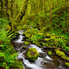 Green Creek - Green gorge<br /> <br /> An excellent creek in heart of Columbia river gorge