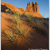 Three Gossips and yucca, Arches National Park, Utah