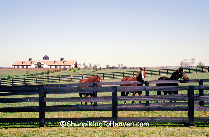 Horse Farm, Woodford County, Kentucky