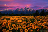 ~Tetons Magic~  Grand Tetons Wildflowers with Super moon and pastel sunrise!