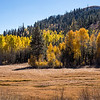 Aspen Grove and Meadow