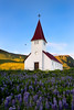 Lupines and the Church at Vik