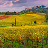 Fields Of Yellow - Val d'Orcia Region, Tuscany, Italy