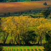 Brilliance Of Autumn In Tuscany - Val d'Orcia Region, Tuscany, Italy