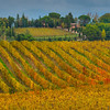 In The Midst Of Yellow - Val d'Orcia Region, Tuscany, Italy