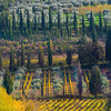 Sections Of Autumn - Val d'Orcia Region, Tuscany, Italy