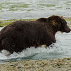 Katmai-Alaska-Kukak-Bay-Grizzly-Brown-Bears-_J700423