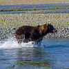 Katmai-Alaska-Kukak-Bay-Grizzly-Brown-Bears-_J700700