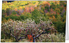 """Fall Apple Harvest <form target=""""paypal"""" action=""""https://www.paypal.com/cgi-bin/webscr"""" method=""""post""""> <input type=""""hidden"""" name=""""cmd"""" value=""""_s-xclick""""> <input type=""""hidden"""" name=""""hosted_button_id"""" value=""""VFDHCTYFXKR8C""""> <input type=""""image"""" src=""""https://www.paypal.com/en_US/i/btn/btn_cart_SM.gif"""" border=""""0"""" name=""""submit"""" alt=""""PayPal - The safer, easier way to pay online!""""> <img alt="""""""" border=""""0"""" src=""""https://www.paypal.com/en_US/i/scr/pixel.gif"""" width=""""1"""" height=""""1""""> </form>"""