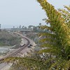 Caryota gigas palm alongside the tracks as they leave Leucadia and cross into Carlsbad