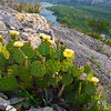 prickly pear, west texas, desert plant, catus,