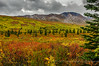 Autumn Arrives at Denali<br /> Denali National Park<br /> Alaska<br /> © 2014