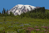 Mt. Rainier Rising Above an Alpine Meadow.