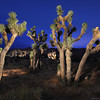Joshua Tree Light Painting Workshop Tour