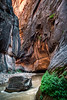 Narrows Life  A huge boulder persists against the relentless current of the Virgin River in the Zion Narrows Zion National Park, Utah, USA
