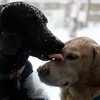 Winter sports: Lucy and Boone in yet another snowstorm, 2014.