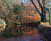 Stoney Creek in Fall