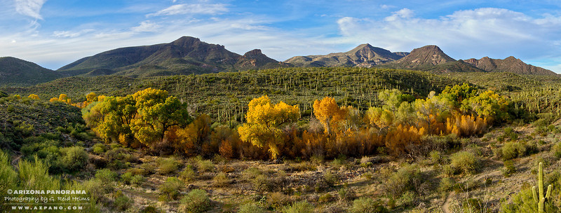 Fall on Cave Creek