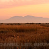 Sunset over Mt Diablo, from Joise Island, Solano County, taken during the Benica Christmas Bird Count, 12-16-13.