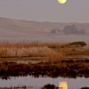 Moonrise from Joise Island, Solano County, taken during the Benica Christmas Bird Count, 12-16-13.