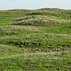 Mima mound landscape in Merced County, CA, 3-11-14. Mima mounds are found in many places worldwide and it is not understood how they are formed. There are theories, read about them here - http://en.wikipedia.org/wiki/Mima_mounds  This is a photomerge of 3 images.