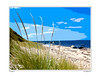 A painting like view of beach grass, Martha's Vineyard
