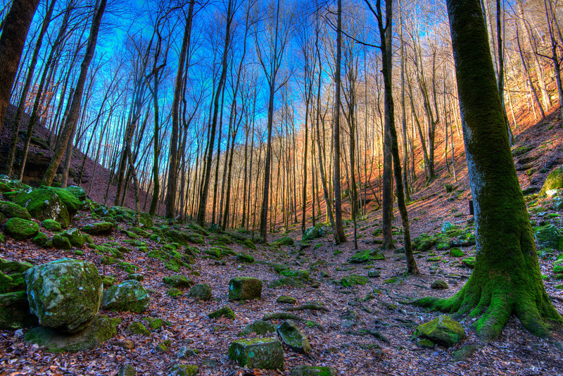 Early Morning in Virgin Falls State Natural Area