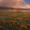 A Mix Of Storms And Rainbows - Antelope Valley California Poppy Reserve SNR, California