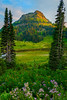 Surrounding In Stunning Wildflowers- Lower Tipsoo Lake, Mount Rainier National Park, Washington St.