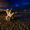 Antelope island causway stump
