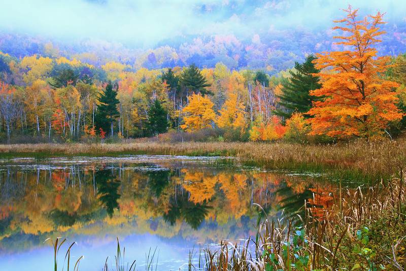 Misty Pond Autumn Landscape, Acadia National Park, Maine