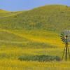 Windmill in the Sunflower Covered Sandhills of Nebraska