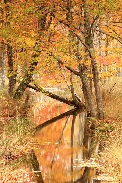 Woodland Stream in Autumn, Acadia National Park