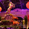 Celebrating the  Chinese Year of the Horse, 2014 at Bellagio hotel, Las Vegas