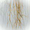 willow fronds in the mist
