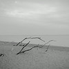 beached branches