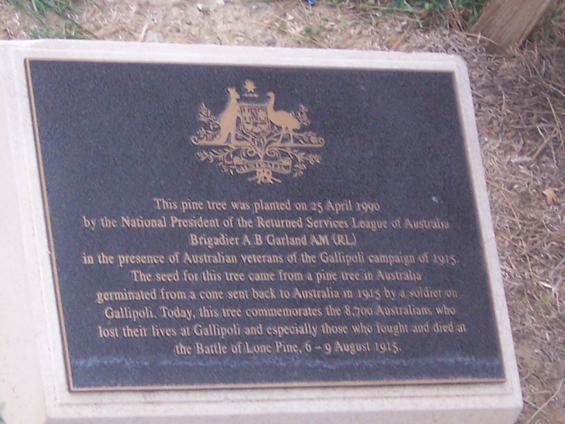 The plaque next to the pine tree planted by the Aussies