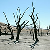 Fossil forest at Deadvlei, Namibia