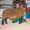 The reserve champion from Stuart Davies of Bucknell, Shropshire sold for 2,000 gns.