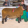 The champion from Stuart Davies of Bucknell, Shropshire sold for 1,200 gns.