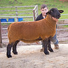 A gimmer from J. G. Douglas of Fraserburgh, Aberdeenshire sold for 2,100 gns.