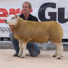 The supreme champion, ram lamb Arkle UFO from G. H. and G. G. Wilkinson of Arkleby , Aspatria, Cumbria.