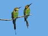 BEE-EATER RAINBOW PAIR_01