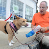 Jim Vaiknoras/staff photo. Layla gets a drink from Warren Hadow at the Reading Fall Street Faire. Layla is visiting from The North East Animal Shelter in Salem.